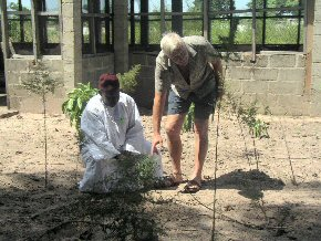 Ian and Mr Darboe discussing the trial plants