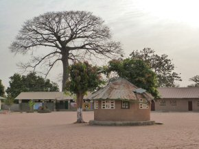 General area and Staff dining area in one of the schools. Magnificent elephant tree in the background