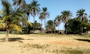 a large Gambian school with a huge shady compound