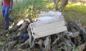 Hives to be repaired