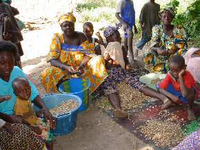 women shelling peanuts