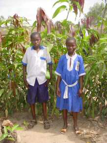 mango tree saplings will be bought from Sinchu Baliya with Gift Token money and donated to families and other schools