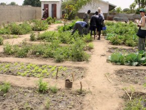 more of the school vegetable garden
