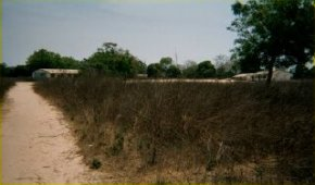 view of Bakalarr school in 2000 showing the dirt road and clasroom blocks surounded by unfenced scrub