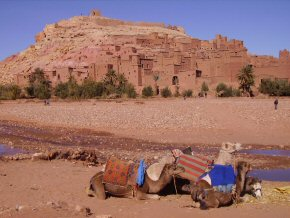 Kasbah and camels at Benhaddou Morocco