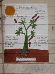 garden murals - how plants work -  photosynthesis